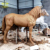 Outdoor Garden Sculpture Metal Bronze Life Size Animal Horse Statues