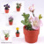 Assorted Artificial Potted Plants On Paper Pot