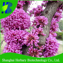 Stress resistance The Chinese redbud seeds for beautiful garden