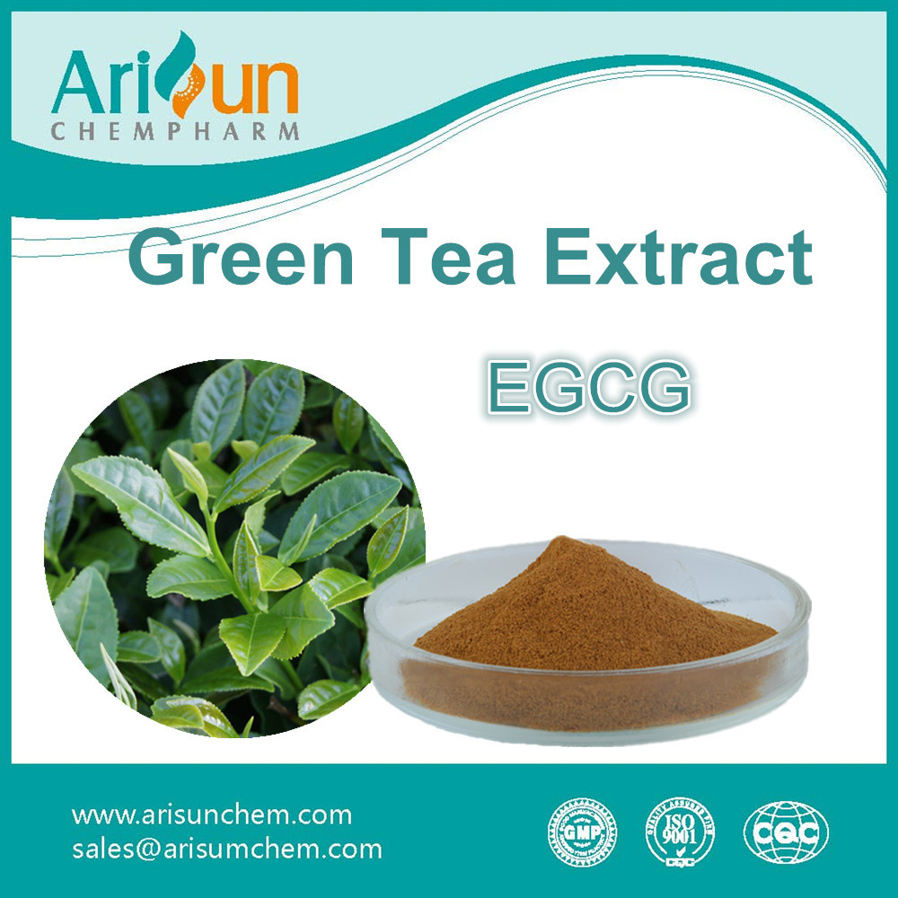 Factory Supply Pure Natural Green Tea Extract Powder EGCG 50%