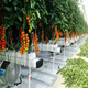 China factory Easy installed low cost plastic film Greenhouse Hydroponic Greenhouse for Tomato