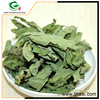 Wholesale products china wild mint herb extract leaves herbal medicine
