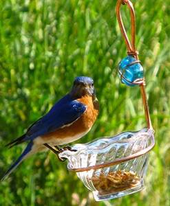 Birds Choice Copper Single Cup Bluebird Feeder by Birds Choice