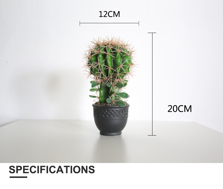 20cm Indoor Flowering Cactus Names