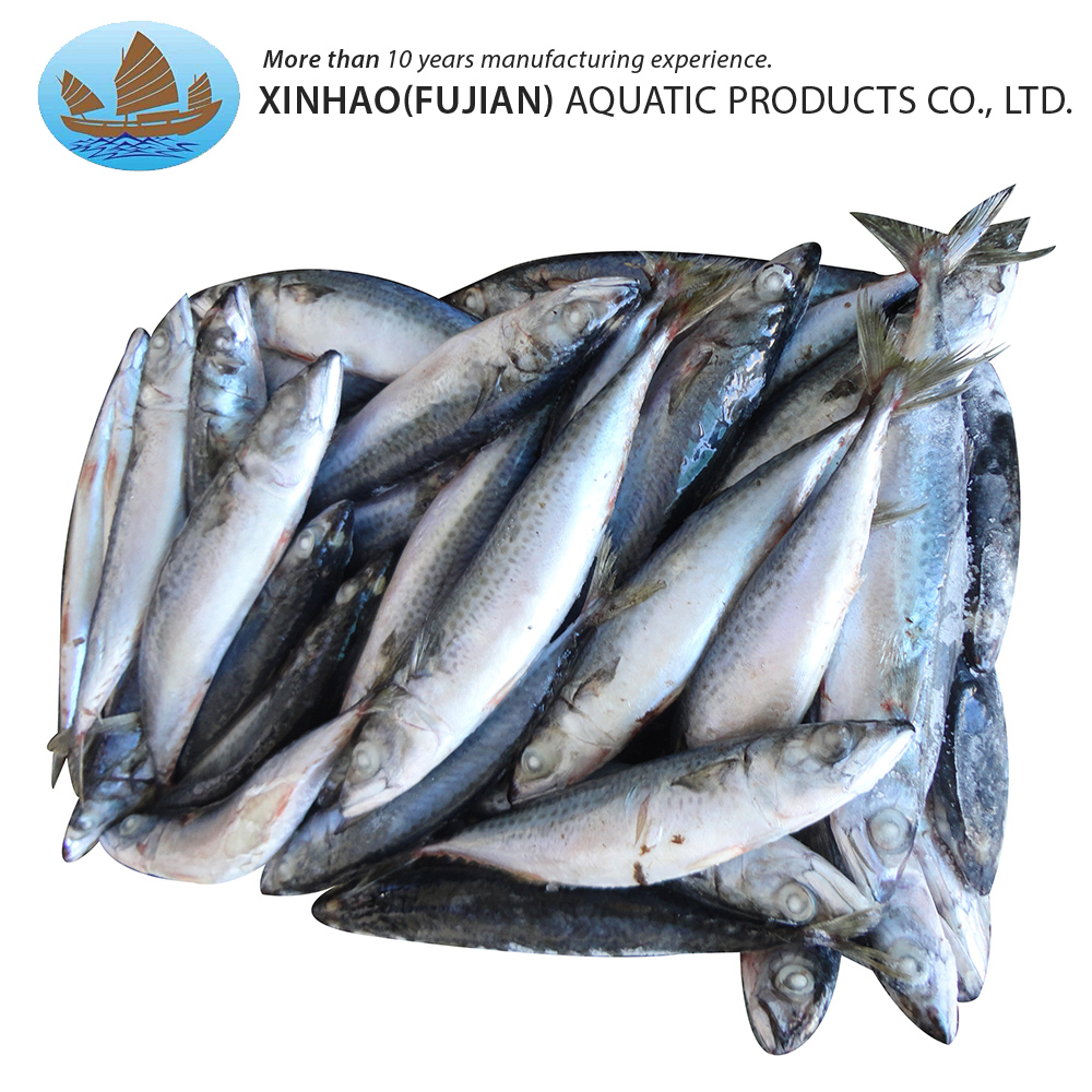 Factory direct sales pacific fish whole round sea frozen mackerel