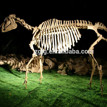 High Quality Dinosaur Fossil Replica Dinosaur Bones For Sale - Buy Dinosaur  Fossil Replica For Sale,Dinosaur Fossil Replica Dinosaur Bones,High