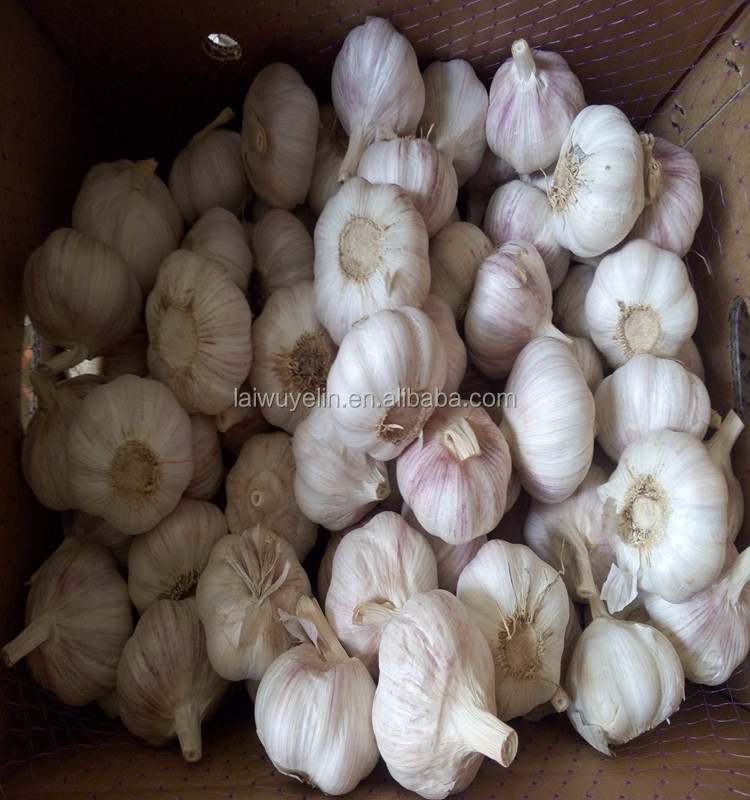 2017 fresh garlic Whole Year supply with ISO BRC FDA certificate ,Famous Shan Dong CHINA Garlic.