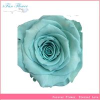Most popular first grade roses flower at reasonable prices