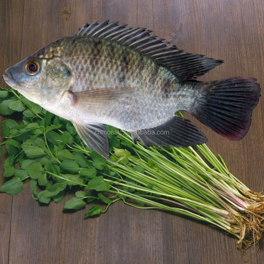 Buy Live Tilapia Fish From China