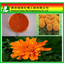 100% pure marigold p.e.20% by ISO9001 Certification