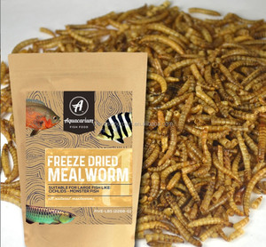 Birds Food Dried Mealworm from Pet Food Factory