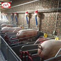 European design used farrowing crates for pigs