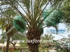 Date Palm Bags with Drawstring at Both Sides