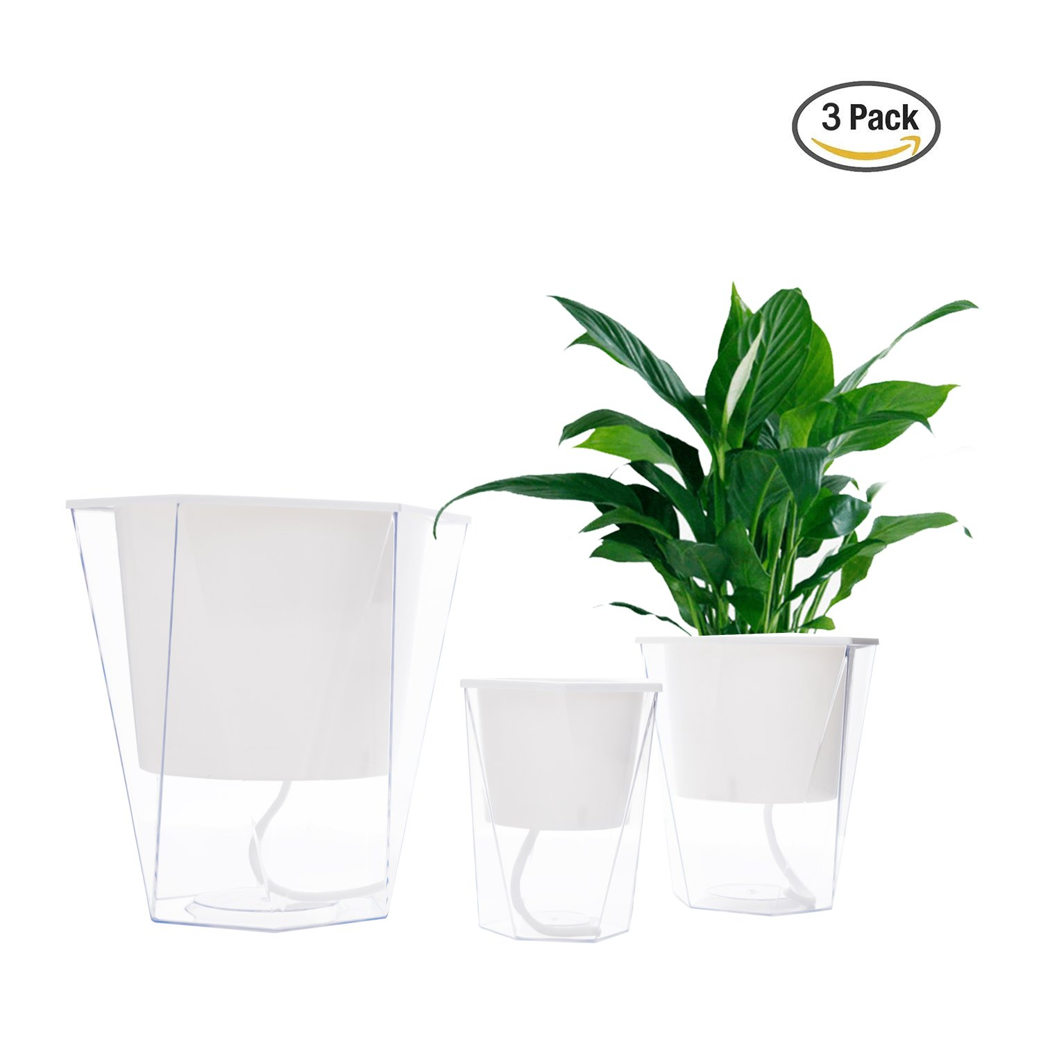 Cheap African House Plants Find African House Plants Deals On Line