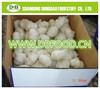 /product-detail/hot-sale-top-quality-best-price-chinese-natural-garlic-60265900917.html