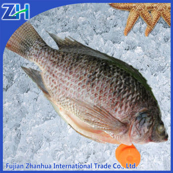 Frozen Seafood Iqf Tilapia Fish Whole Round Supply
