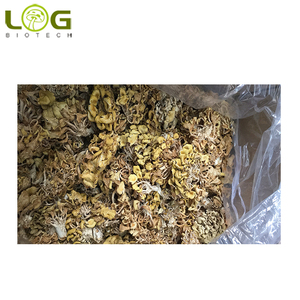 2018 hot sale Good quality Dried Golden Oyster Mushroom