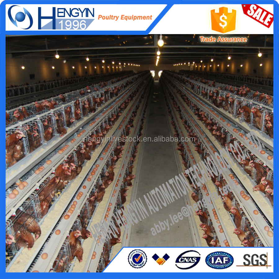 stainless steel chicken cage/Egg chicken layer cage price
