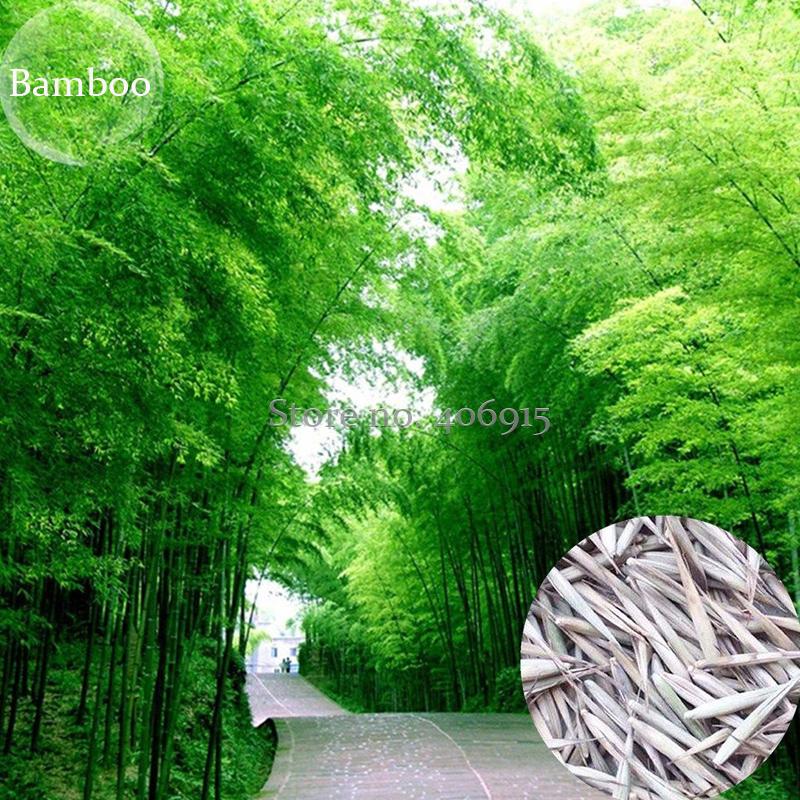 rapide bambou promotion achetez des rapide bambou promotionnels sur alibaba group. Black Bedroom Furniture Sets. Home Design Ideas