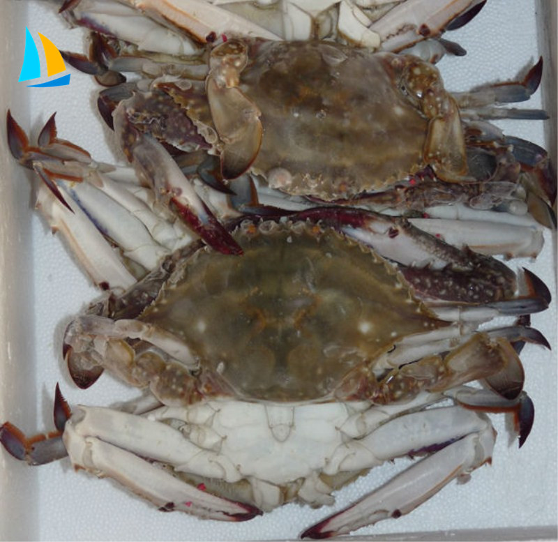 recipe: order live blue crabs online [24]