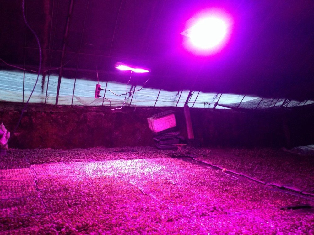 Lumini 12 Volt Led Lights Plants Full Spectrum Led Grow Lights For ...