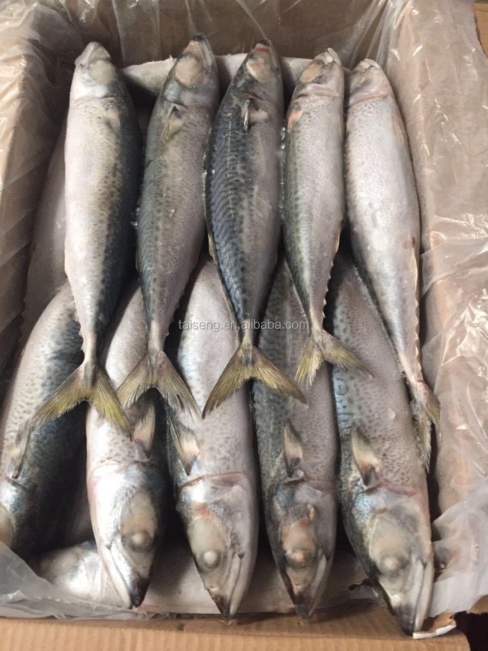Uskumru Balığının Lezzetli Olduğu Zamanlar