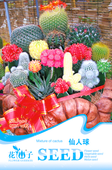 online kaufen gro handel mini kaktus aus china mini kaktus gro h ndler. Black Bedroom Furniture Sets. Home Design Ideas