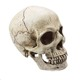 Custom high quality hand carved polyresin skull for sale