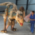 Outdoor Natural size playground dinosaur and animatronic life-sized raptor for sale