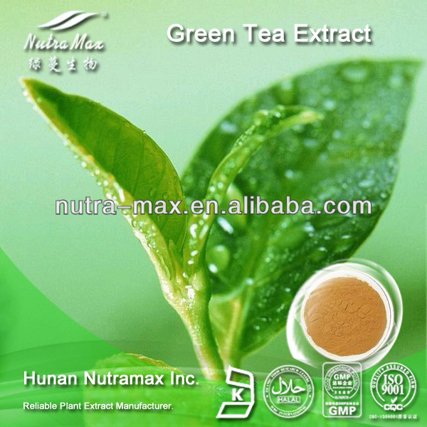 GMPManufacturer Supply Green Tea Extract ,Green Tea Leaf Extract L-Theanine20%~50% ,Camellia Sinensis O. Ktze.(CAS: 34271-54-0)