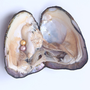 Wholesale Multi-color Pearl Freshwater Oyster With Pearl