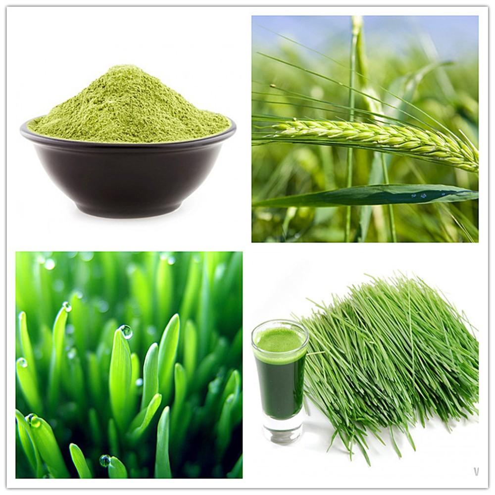 Health Benefits Super Greens Organic Barley Grass Powder