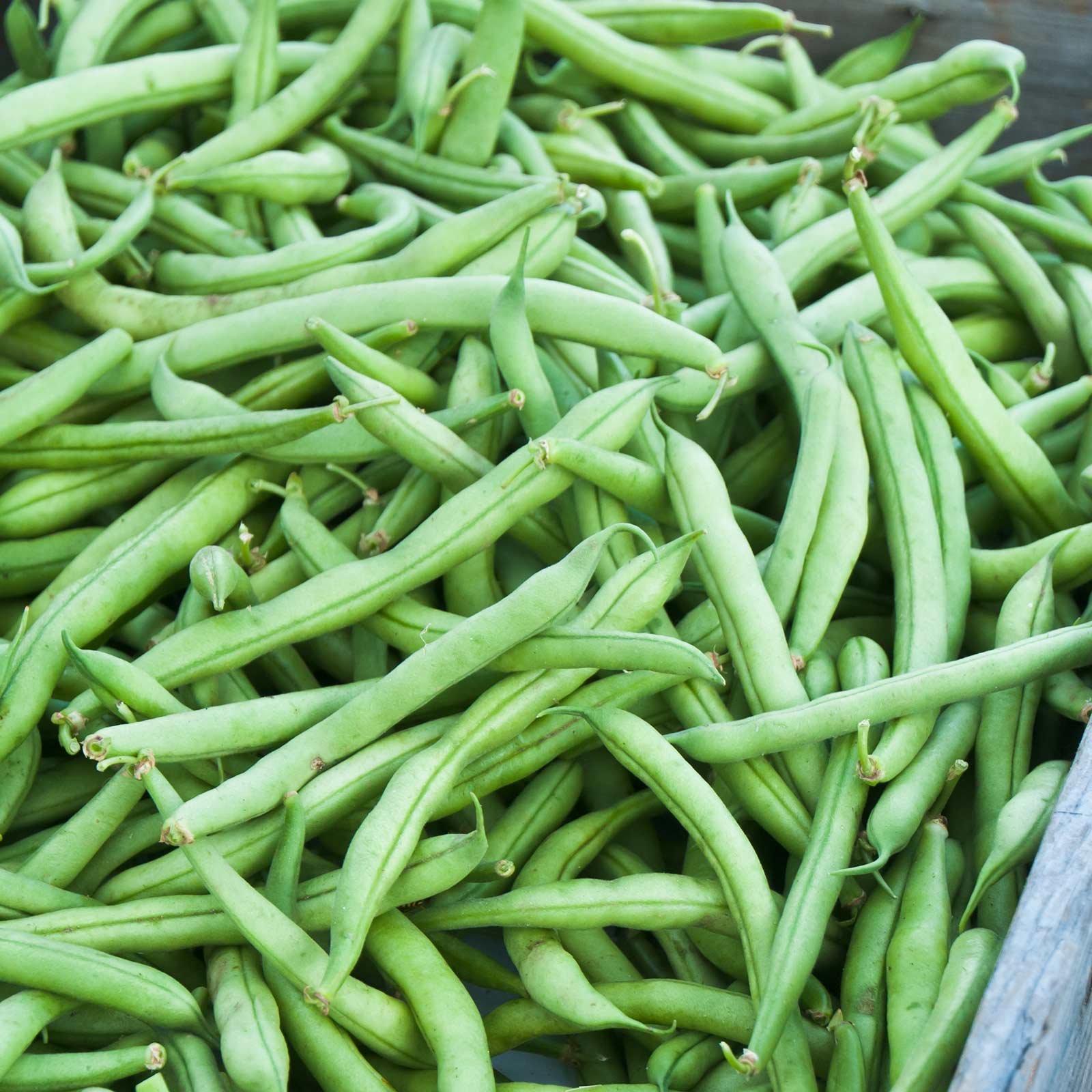 Strike Bush Bean Seeds - 1 Lb - Non-GMO, Heirloom Green Snap Bean Seeds - Vegetable Garden Seeds