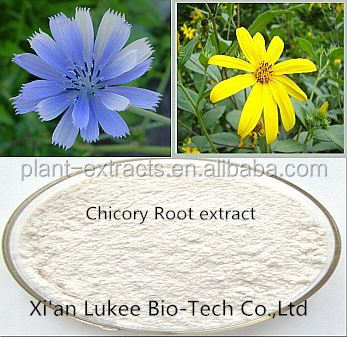 Organic Chicory root Extract powder Inulin 95% Chinese herbal extract Kosher &ISO certified Factory supply/CAS No. 68650-43-1