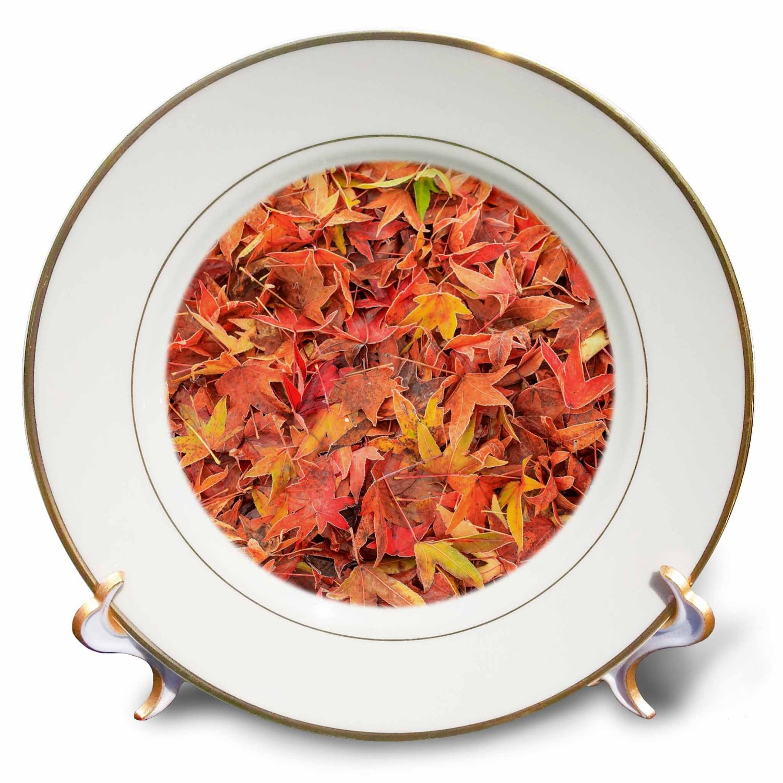 Danita Delimont - Autumn - Autumn color, maple leaves, Mill Creek, Washington State, USA - 8 inch Porcelain Plate (cp_231821_1)