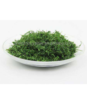 Natural Loose Sun Dried Wild Gynostemma pentaphyllum Organic herbal tea Gynostemma pentaphyllum