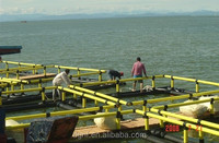 8mx8m aquaculture square cage for sea fish farm