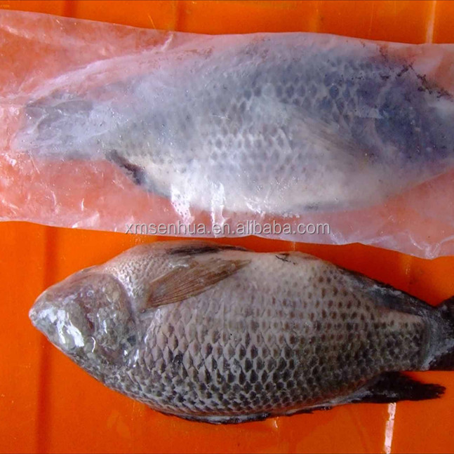 Small tilapia fish nile perch