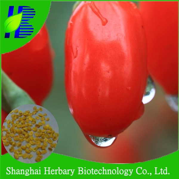 High germination gou qi seed for planting, wolfberry plant seeds for sowing