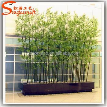 Arbre bambou prix