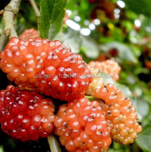 Delicious frozen mulberry and frozen fruits from direct factory