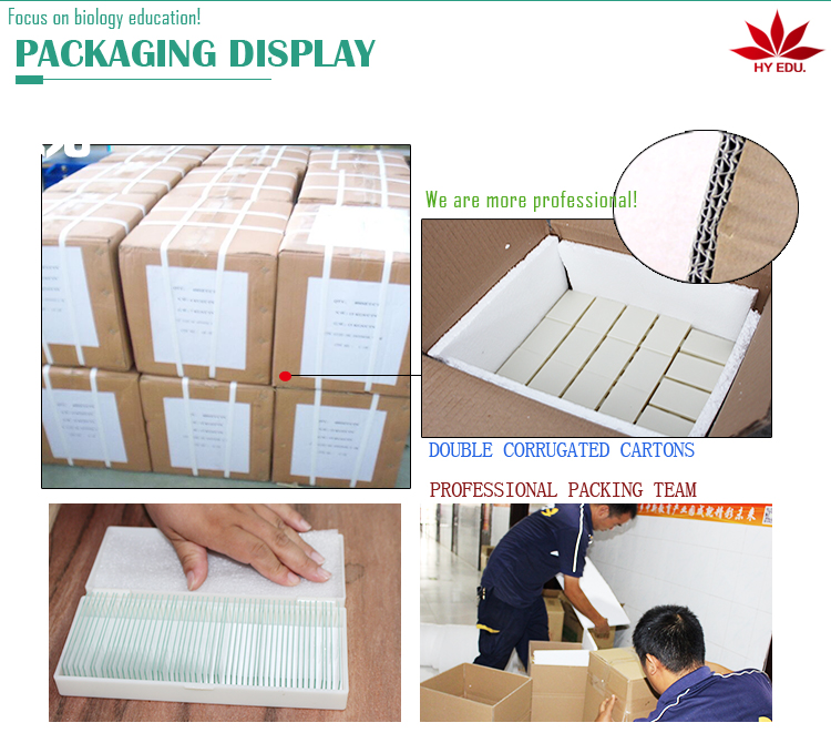 Individual microscope prepared slides Medical parasite microscope slides