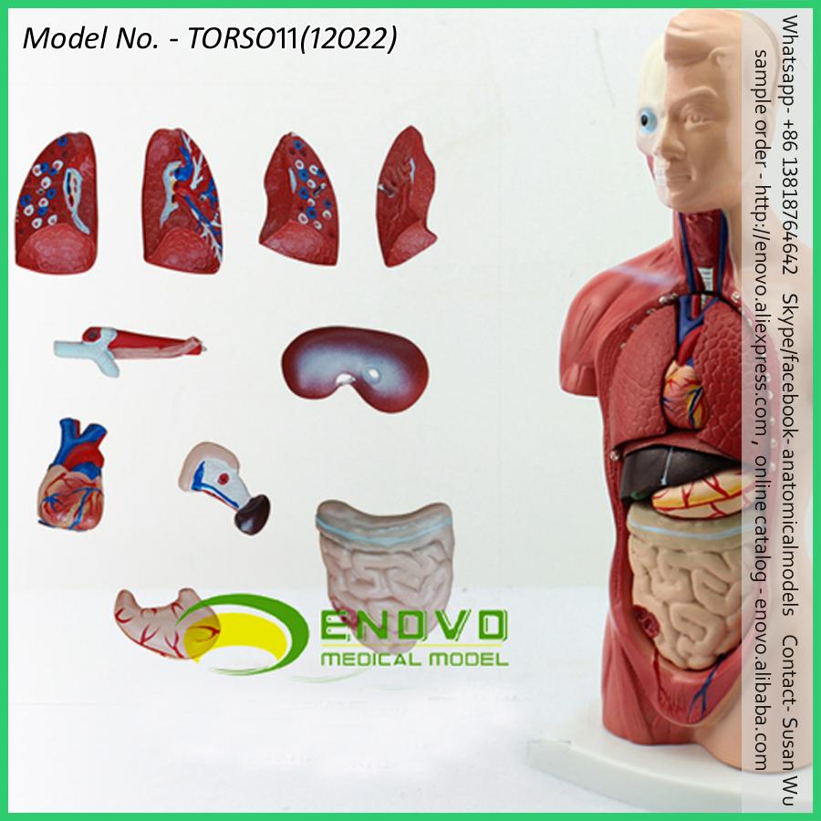 Großhandel anatomie 3d des menschlichen körpers Kaufen Sie die ...