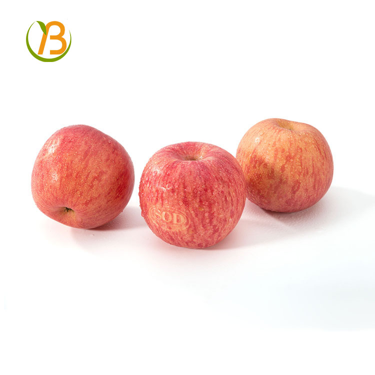 export fresh red delicious apple fruit fresh apple/custard apple fruit/apple fruit specification