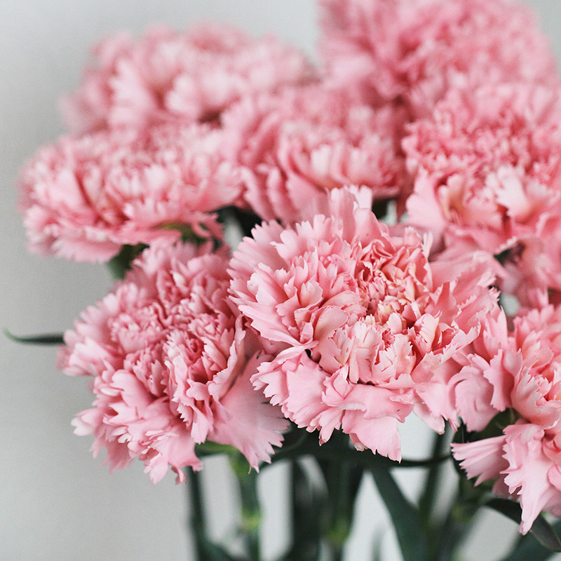 Букеты недорого, оптом компания цветы гвоздики