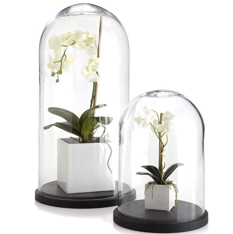Glass Cloche Bell Jar Display Dome with Black Wooden Base