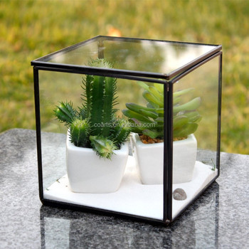 Indoor Decoration Air Plants Cube Shape Black Frame Geometric Glass
