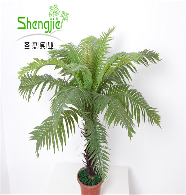 SJLJ013058 Guangzhou Shengjie types of ornamental plants for landscaping