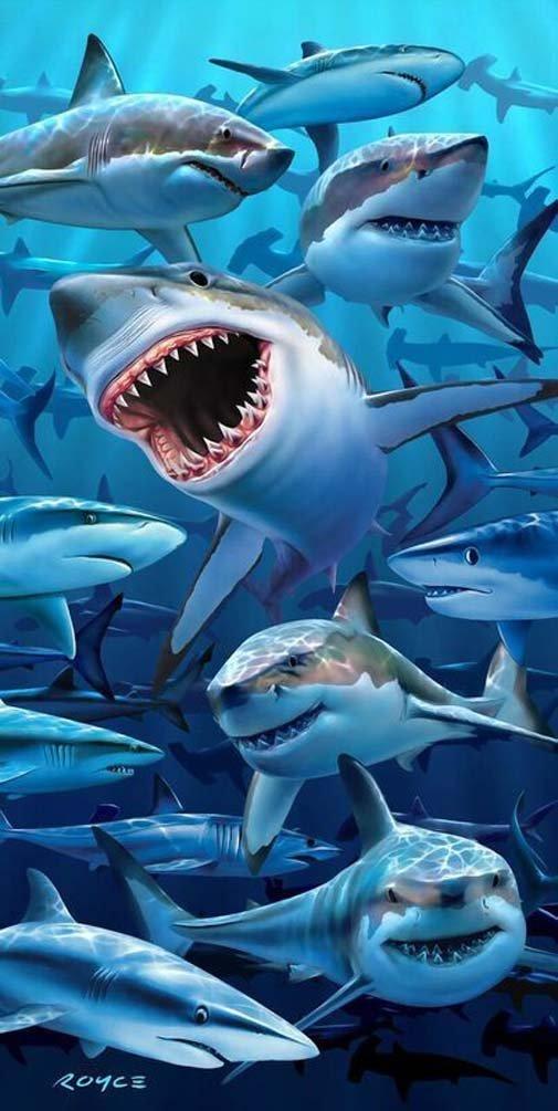 """Sea Hungry Sharks Beach Towels - Sharks Beach Pool Towel 30""""x60"""""""