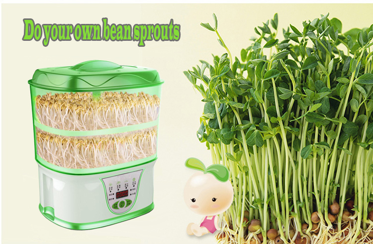 Factory Supply 24~36 Hours Green Bean Sprout Machine For Home - Buy  Automatic Bean Sprout Machine,Electrical Bean Sprouting,Home Bean Sprout  Machine